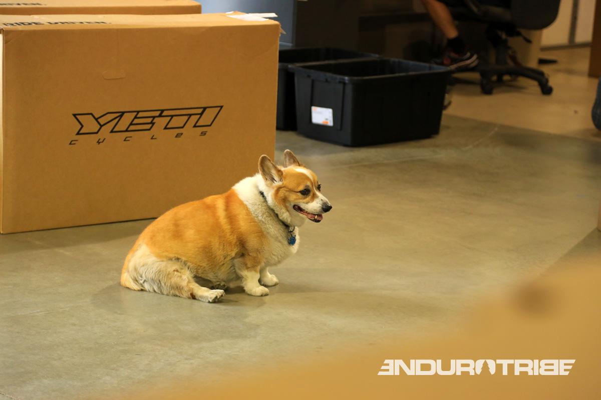Original, les employés peuvent venir travailler avec leur animal de compagnie...