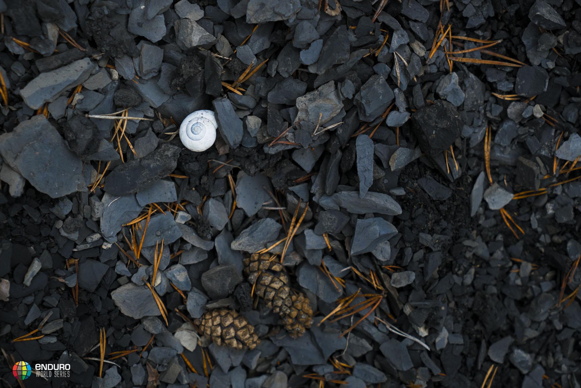 Grey earth is a shale-splendor