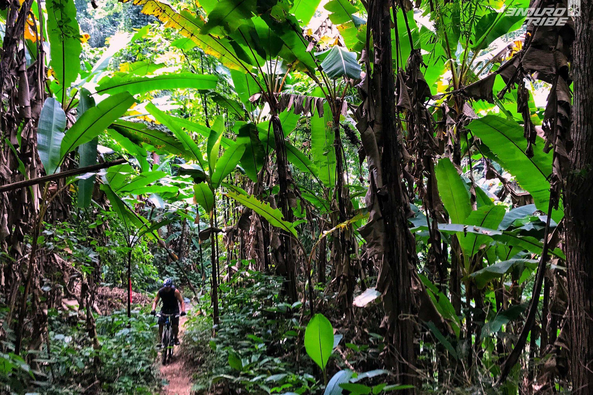Si vous raffolez de banane, les plantations sont nombreuses dans le coin