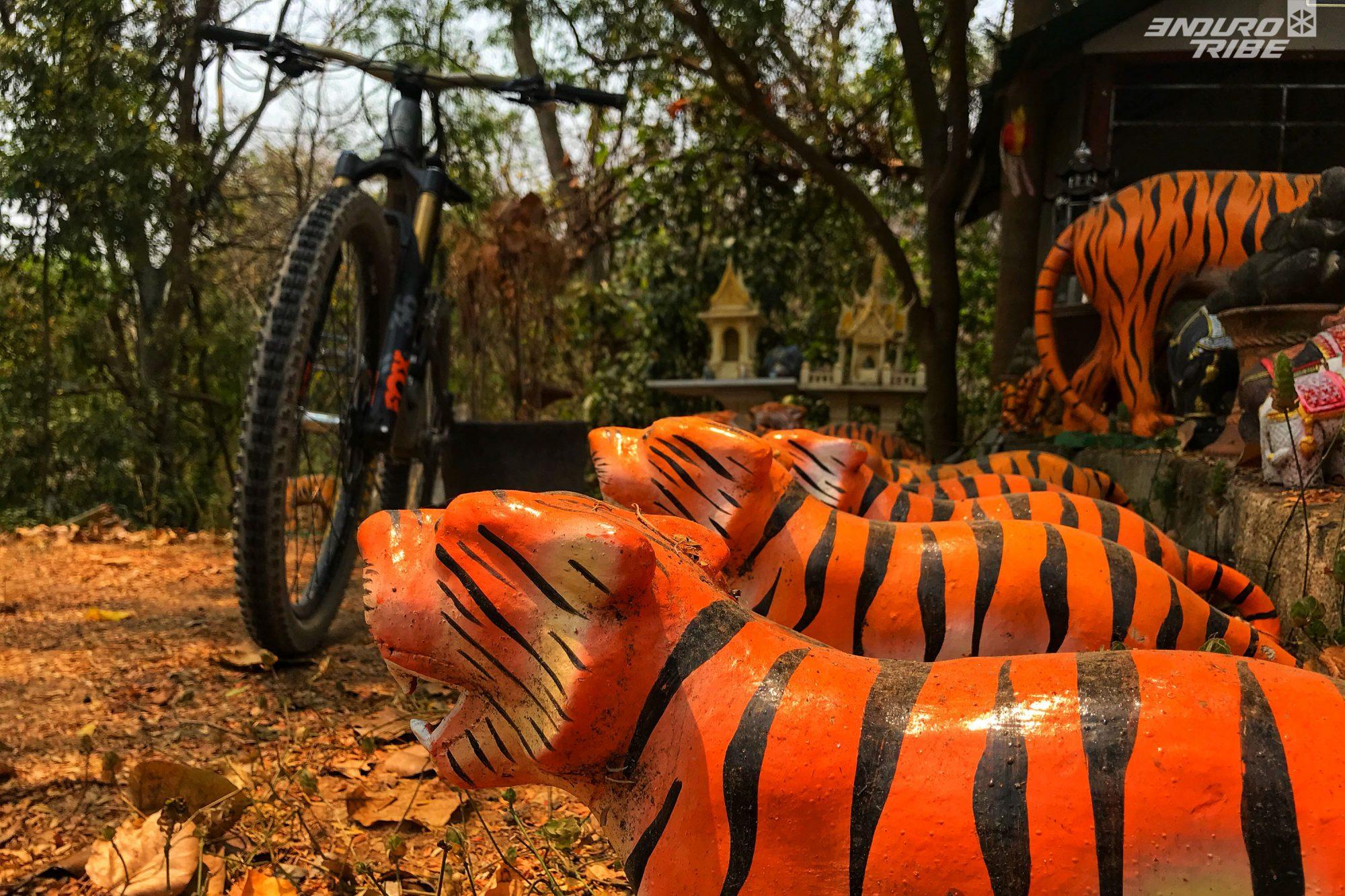 En principe plus de tigre dans le parc national mais… sait-on jamais !